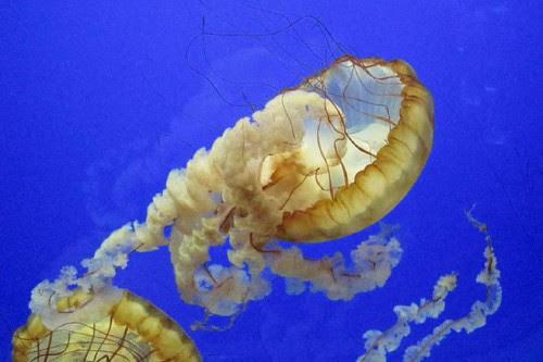 Oregon Coast Aquarium 6