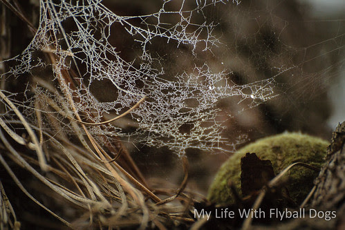 A tennis ball was stuck up in a tree branch at the park, left to grow spiderwebs and frost.