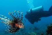 Turis Asal Swedia Hilang Saat Menyelam di Perairan Komodo