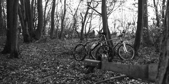 Pruning 'Kinchie woods