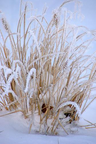 Frozen-fog-3_edited-1