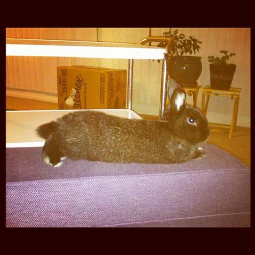 Bunny Chillin'