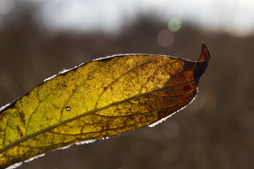 frost & glow