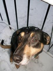 Teutul_snow_30909