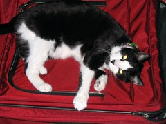 Simon on the red suitcase