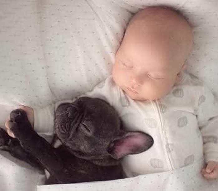 Ivette Ivens fotografou o filho e o cão... nascidos no mesmo dia