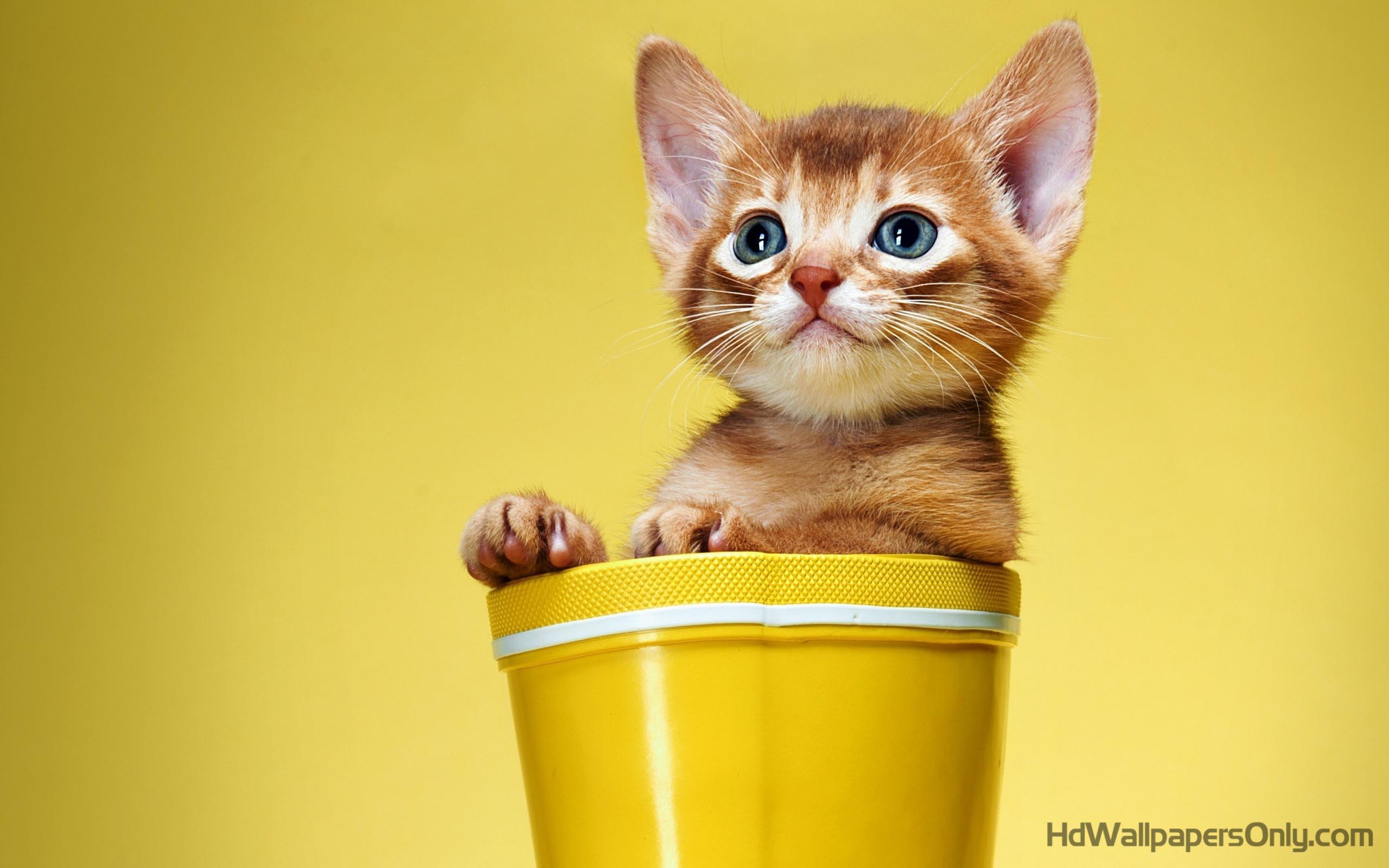 Nice Cute Cat Wallpaper