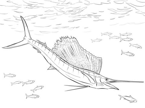 malvorlagen fische hecht - zeichnen und färben