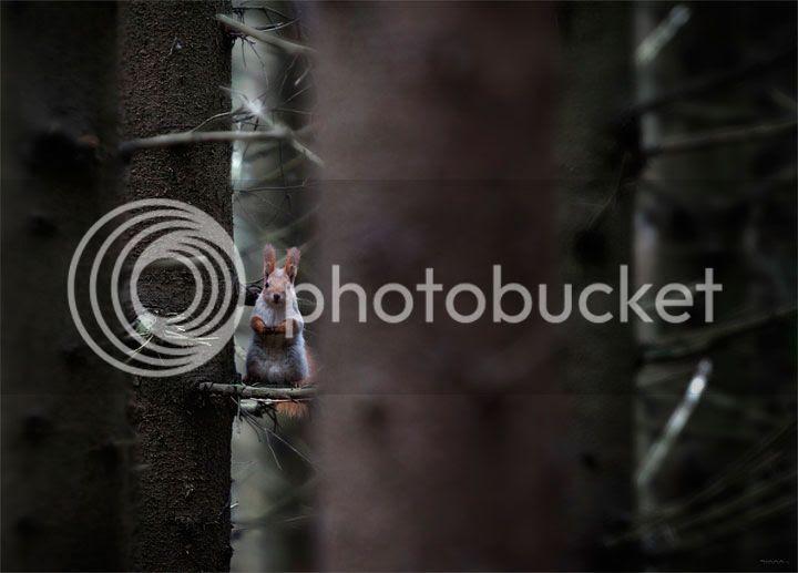 photo Dmitry-Posevich-1_zpsk1utrh77.jpg