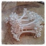 Pręciki do kwiatów kulki białe