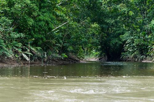 Rio Napo Meeting the Anangu Creek