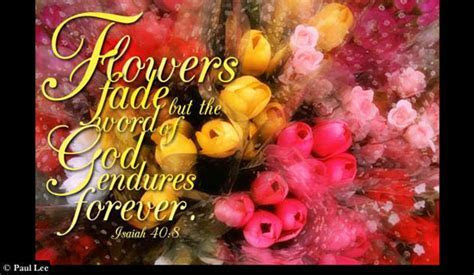 Free Flowers Fade eCard   eMail Free Personalized