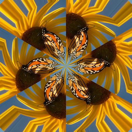 Butterflyflake