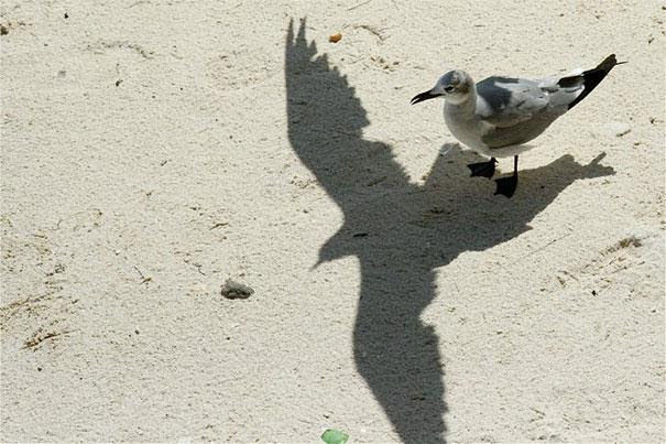 Όταν μια σκιά αλλάζει όλη την εικόνα (12)