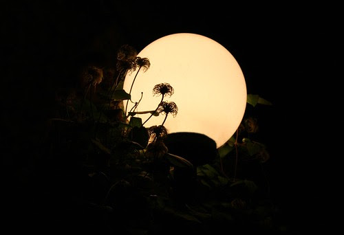 White moon, bright moon, pearling the air