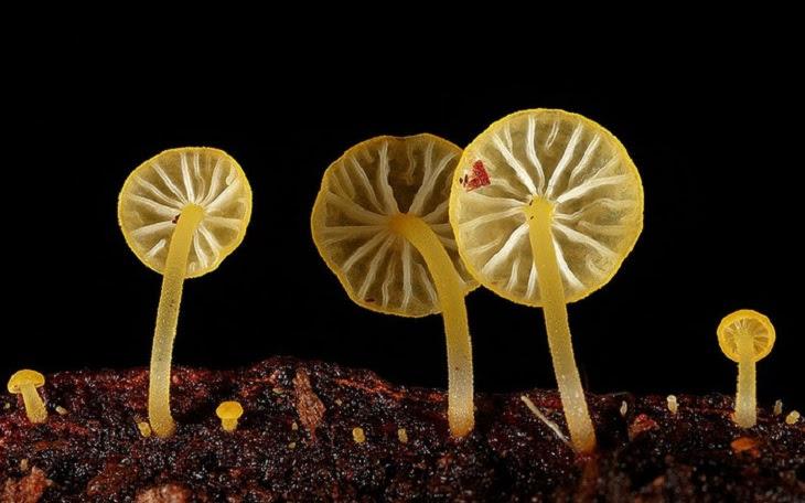 O Mundo Fascinante dos Cogumelos