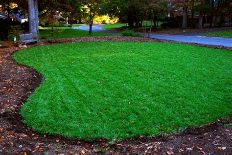 how to make a green lawn