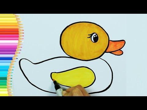 ördek Boyama Sayfası ördek Nasıl çizilir Renkleri