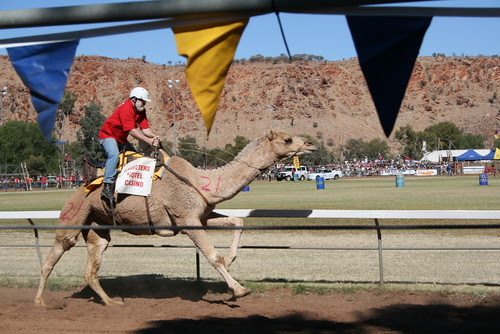 Camel Cup Alice Springs