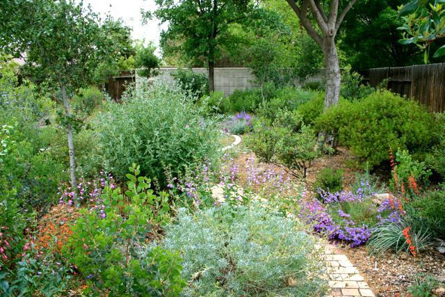 Native Plant Garden In Bakersfield