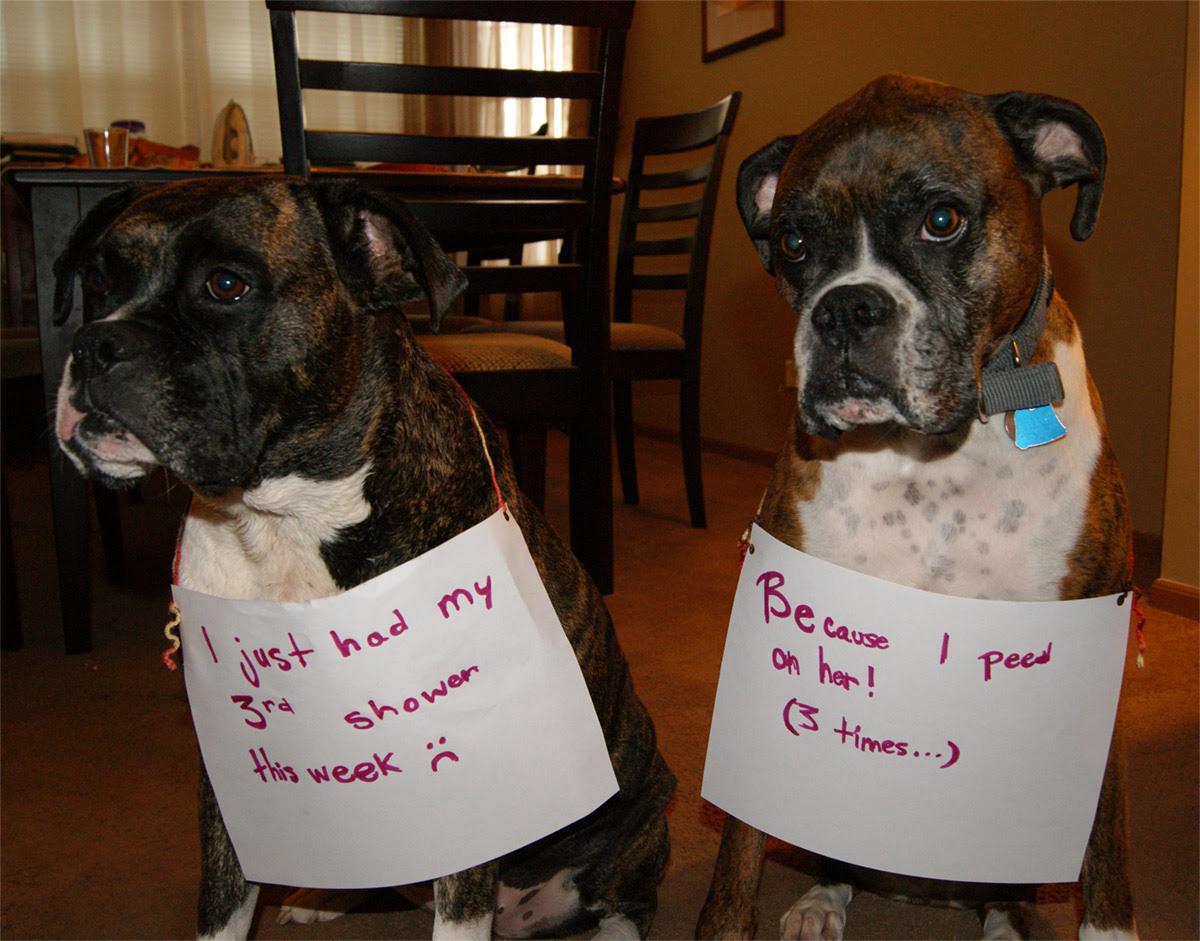 dog shaming 26 32 Hillarious Public Shaming of Dogs