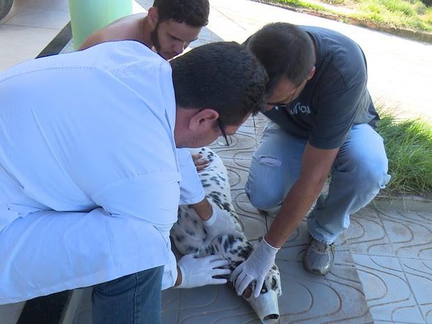 teste da leishmaniose RO (Foto: Rede Amazônica/Reprodução)