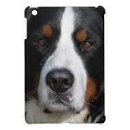 Bernese Mountain Dog - Close Up iPad Mini Case
