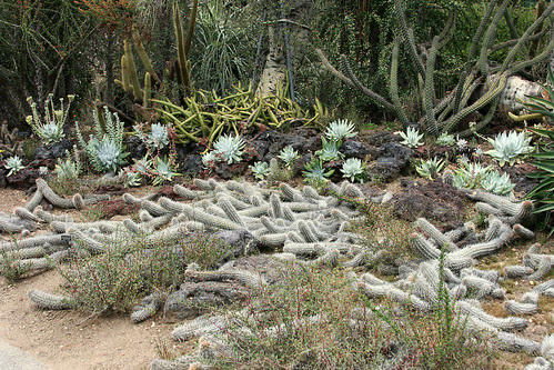 huntington cacti snakes