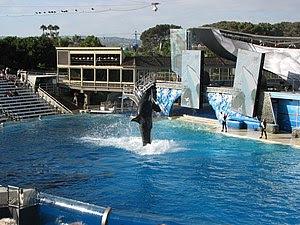 English: Shamu exhibition in SeaWorld, San Die...