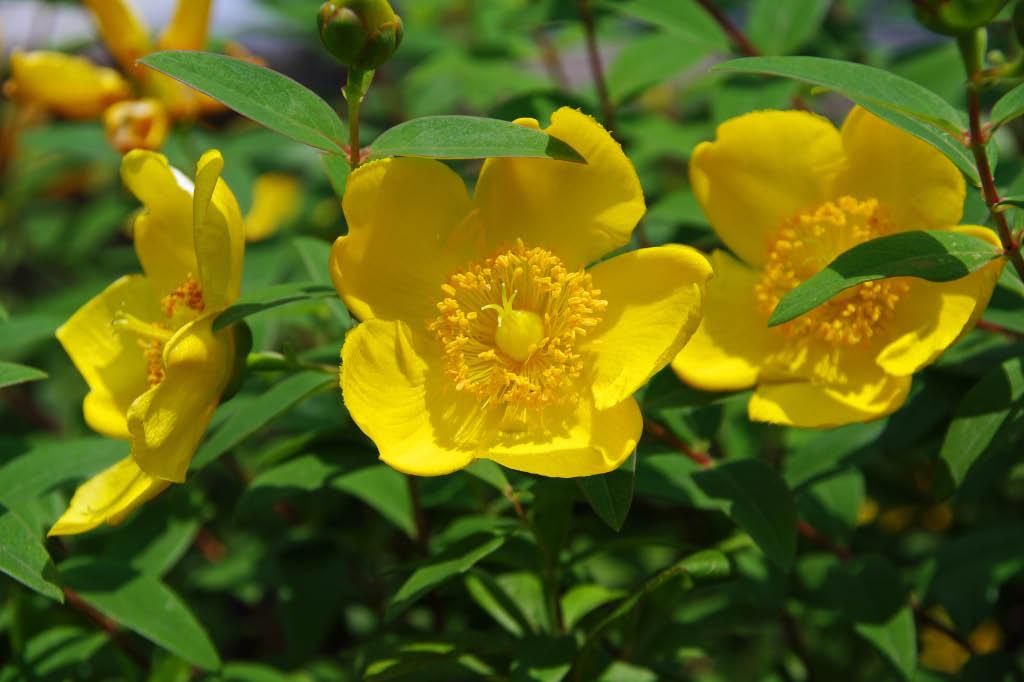 散歩道6月の花たち ちびたの気まぐれ日記 アウトドアと散歩写真のブログ