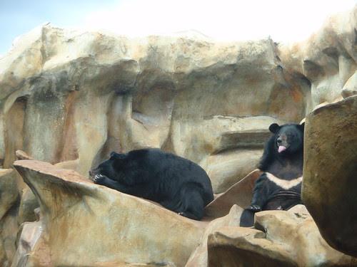bears together