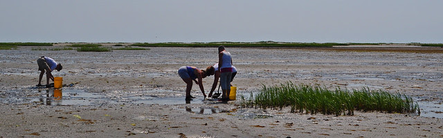 Master Naturalists on the Flats (6)