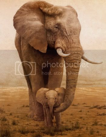 elephants Pictures, Images and Photos