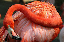 Lightmatter flamingo2.jpg