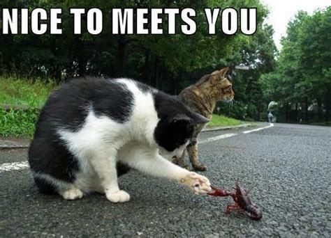 Nice To Meet You Scraps and Nice To Meet You Facebook Wall