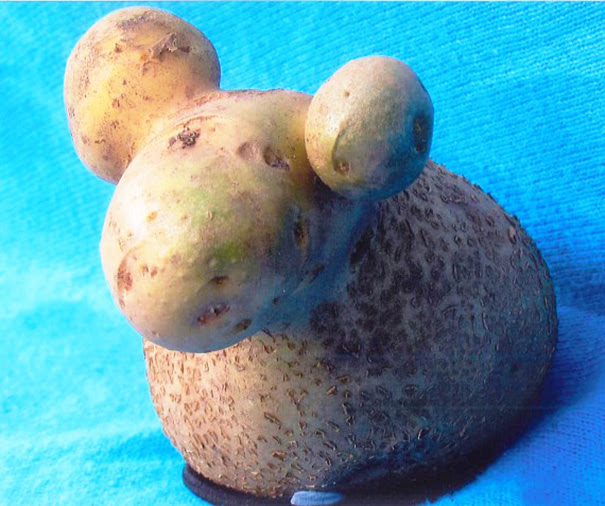 Potato That Look Like A Sheep