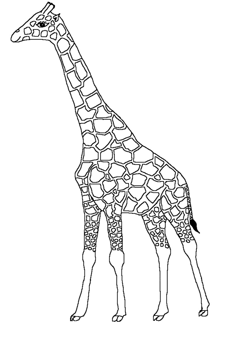 Dessin Coloriage girafe a imprimer et colorier
