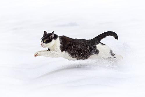 Oskar running in the snow II