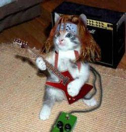 Download 100+  Gambar Kucing Rock Paling Baru HD