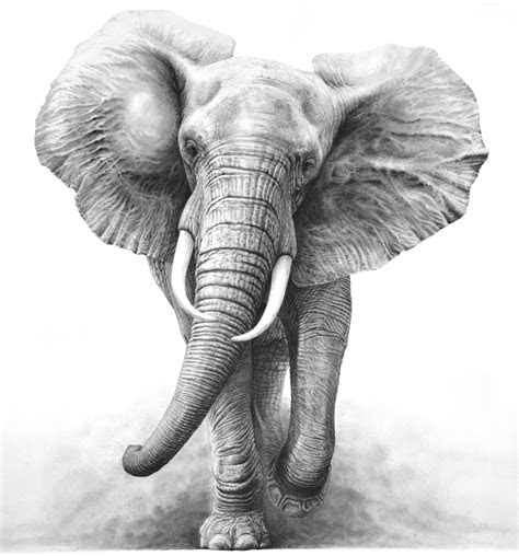 elephant pencil drawing tattoo design elephant love