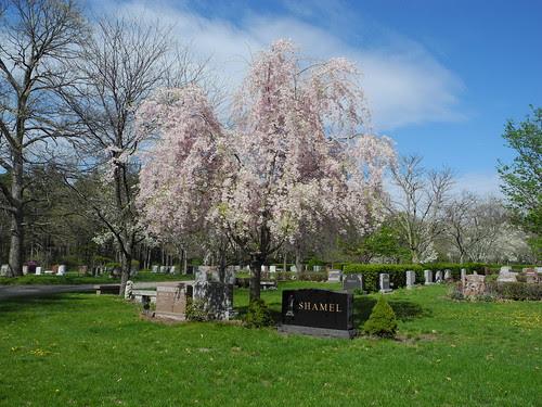 Spring in the Cemetery by midgefrazel