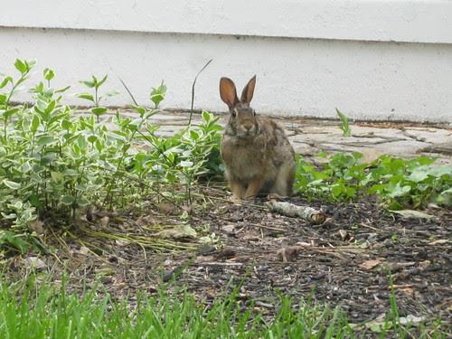 Backyard Guest