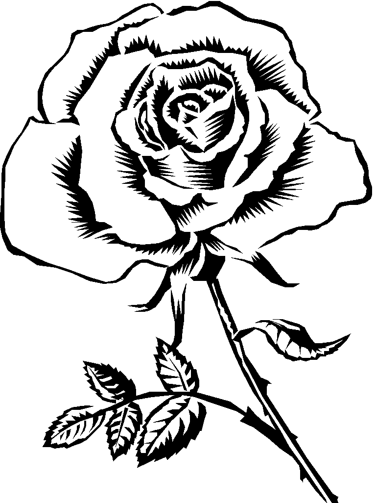 Free Rose Flower Drawing Download Free Clip Art Free Clip Art On Clipart Library