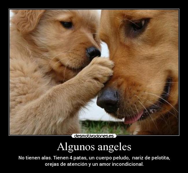 Frasesamor Frases Sobre El Amor Incondicional De Un Perro