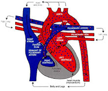 Isaac's Heart