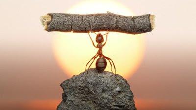 Texto Motivacional Trabalho Em Equipe Formigas Palavras