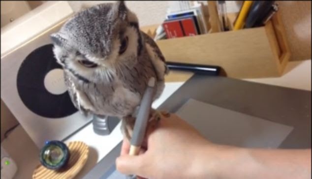 The creature manages to cling on despite its owner moving his hand at great speed