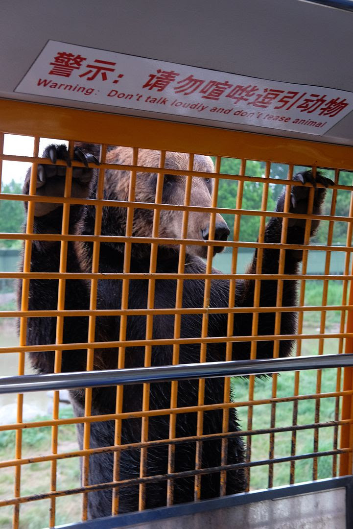 photo shanghai wildlife animal park safari.jpg