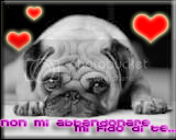 2SpiritsBlog with dogs