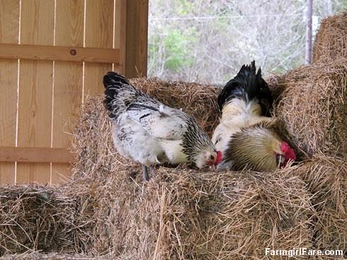 (25-1) Hay inspectors back on the job - FarmgirlFare.com